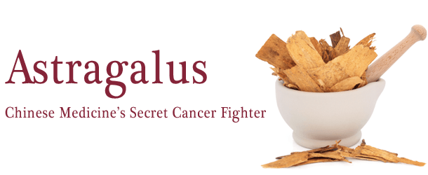 Astragalus, Chinese Medicine's Secret Cancer Fighter