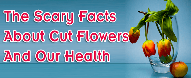 The Scary Facts About Cut Flowers and Our Health