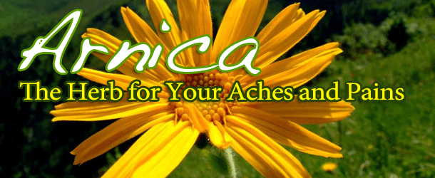 Arnica: The Herb for Your Aches and Pains