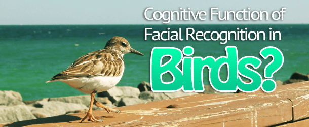 Cognitive Function of Facial Recognition in Birds?