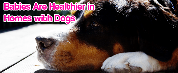 Babies Are Healthier in Homes with Dogs