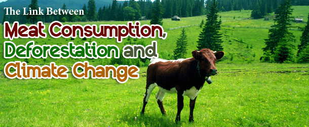 The Link Between Meat Consumption, Deforestation and Climate Change