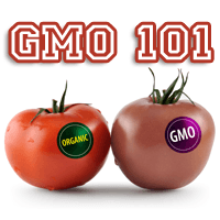 GMO 101 -What Does It All Mean?