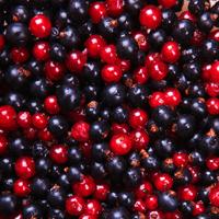 Summer Fruits - Berries