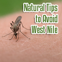 West Nile Virus Danger the Worst Ever: How to Take Natural Precautions