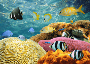 Damaging the Circle of Life: Pesticides and GMOs Impact Our Coral Reefs