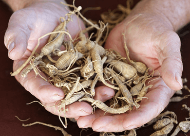 Naturally Boost Your Brain Power With Herbs