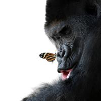 More Species in Danger Due to Habitat Changes: Top 25 Endangered Primates Revelaed