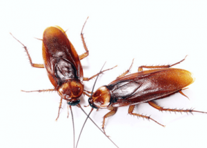 Repel These 5 Household Pests Naturally