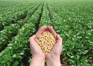 "Soy: The ""Health Food"" That's Killing You"