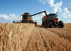 Is Gliadin and Wheat Wreaking Havoc On Our Bellies?