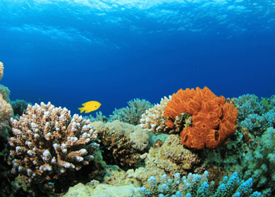 Greenhouse Gas Emissions Causing Coral Bleaching