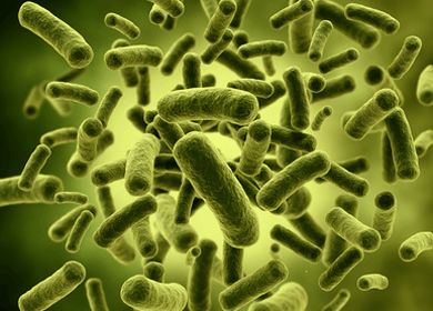 It's Alive! Natural Probiotics in Fermented Foods