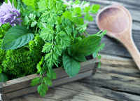 The Healing Powers of Mint