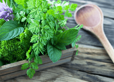 healing powers of mint