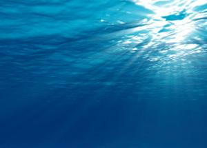 The Incredible Benefits of Marine Phytoplankton