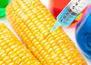 "GMO Corn Found in Humans Creates a ""Living Pesticide Factory"