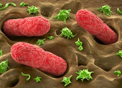 Nightmare Bacteria Laughs in the Face of Antibiotics