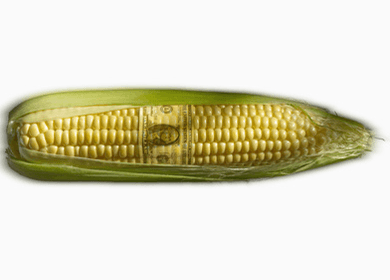 GMO Corn Linked to Golf-ball Sized Tumors