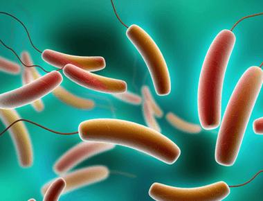 Probiotics Could Prevent Fatal Toxic Shock in Women