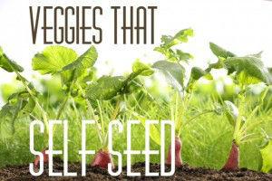 self seeding