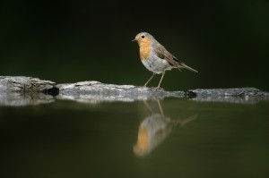 bird and water