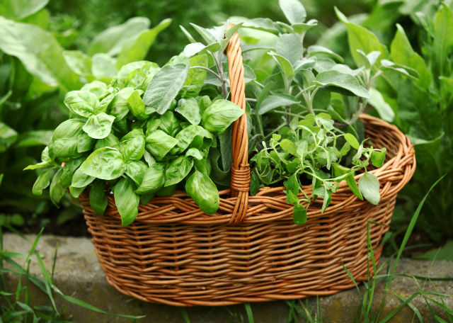 Baskets with herbs