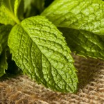 Organic Green Mint Leaf