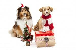 Gifts and christmas tree in front of two dogs
