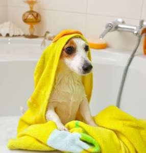Dog taking a bath in a bathtub