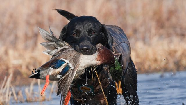 Dog Rescue In Springfiels Ohio