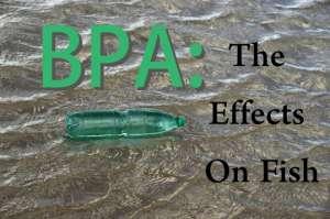 bpa fish