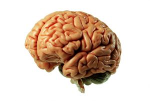 Brain Tricks that Work: Just Say No to Junk