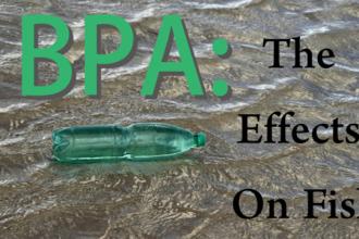 bpa-fish-640x359