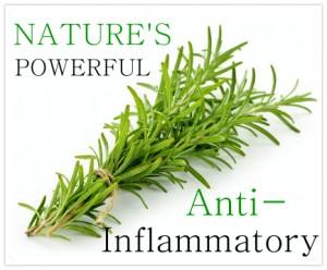 rosemary inflammatory