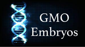 GMO embryos