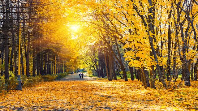 Walk in a beautiful park in autumn