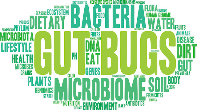 Gut Bugs Word Cloud On a White Background.