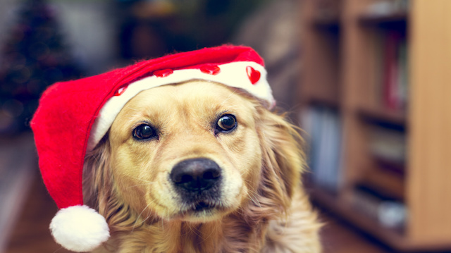 Dog with Santas Claus hat