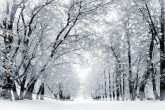 Winter scenery, snowstorm in park