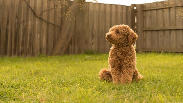 Dog Breeds That Don T Wander