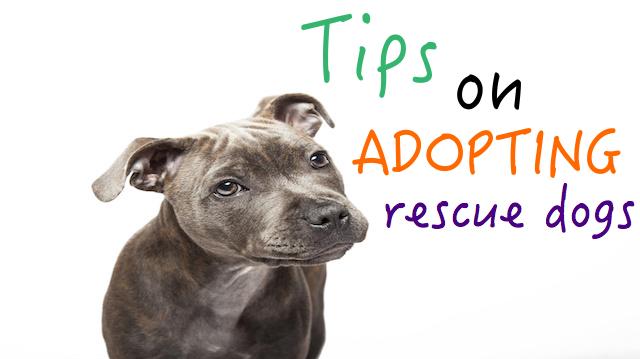 tips on adopting a rescue dog. Black Bedroom Furniture Sets. Home Design Ideas