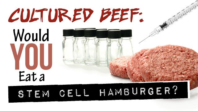 Cultured Beef Would You Eat A Stem Cell Hamburger