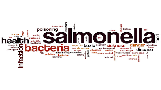Salmonella word cloud