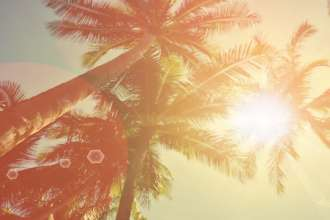 Blur tropical palm tree with sun light abstract background.