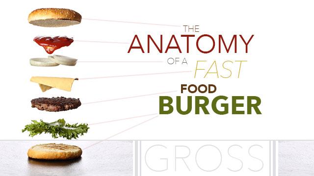 anatomyoffastfoodburger_640x359 (1)