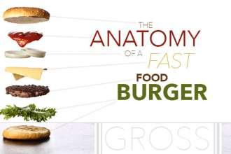 anatomyoffastfoodburger_640x359