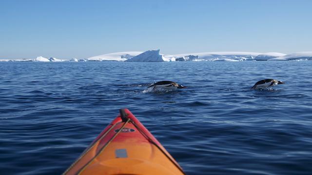 Kayak and diving penguins (Antarctica)