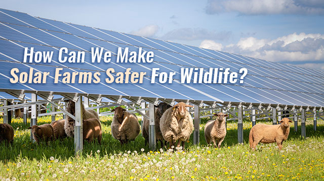 HowCanWeMakeSolarFarmsSaferForWildlife_640x359