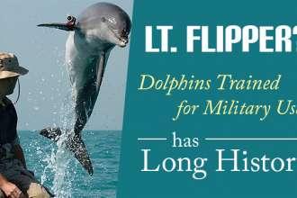 LtFlipperDolphinsTrainedforMilitaryUseLongHistory_640x359
